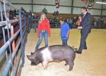 Alexis Pickens, center, maneuvers a hog in the Clarke County Special Needs Livestock Show under the watchful eyes of 4-H member Brittany Conner on Jan. 23, 2015. U.S. Congressman Gregg Harper is reporting observations as he serves as the celebrity judge for the annual event in Quitman, Mississippi. (Photo by MSU Ag Communications/Linda Breazeale)