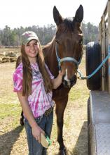 Millie Thompson of Starkville grooms her horse, Snip, before riding on Feb. 11, 2015. Thompson is preparing for the 2015 Mississippi 4-H Equine Shadow Program taking place in conjunction with the Dixie National Quarter Horse Show Feb. 16-22 in Jackson. (Photo by MSU Ag Communications/Kevin Hudson)