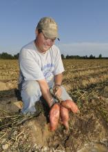 Brad Spencer, of Spencer and Sons Farms in Calhoun County, tests a bed of sweet potatoes near Vardaman Sept. 28 to see if they are ready to harvest. (Photo by Scott Corey)