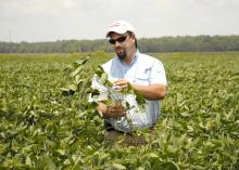 Trent Irby, soybean specialist with the Mississippi State University Extension Service, evaluates the maturity of soybean plants on Aug. 2, 2013, in a research plot located at the R.R. Foil Plant Science Research Center in Starkville, Miss. (Photo by MSU Ag Communications/Linda Breazeale)