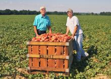 Benny Graves, executive director of the Mississippi Sweet Potato Council and Matthew Knight, a grower in Webster County, inspect harvested sweet potatoes on Sept. 4, 2013. (Photo by MSU Ag Communications/Scott Corey)