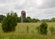 Abandoned corn silage silos dot the Mississippi countryside as towering monuments marking the locations of former dairy farms like this one in Oktibbeha County on May 30, 2014. (Photo by MSU Ag Communications/Linda Breazeale)