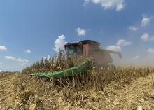 Harvesting corn at Simmons Planting Co. in Arcola, Mississippi, on Aug. 22, 2017. (Photo by MSU Extension Service/Kevin Hudson)