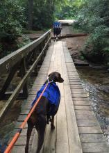 Keep dogs on leashes while on nature trails to keep them from chasing or harassing the wildlife. (Photo by MSU Extension Service/Evan O'Donnell)