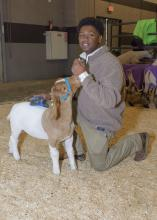 A young man kneels next to his goat at the Dixie National Sale of Junior Champions.