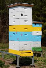 Boxes containing bee hives have honey bees swarming near opening.