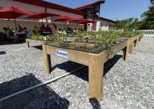 Students at North Bay Elementary School in Biloxi, Mississippi, observe the new school garden planted in salad tables.