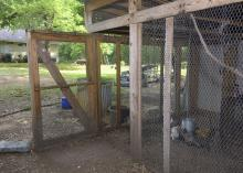 The door stands open on a poultry pen wrapped in chicken wire.