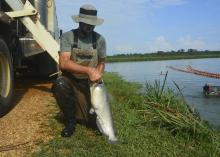 A man kneeling between a transport truck and a pond holding a very large catfish.