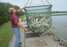 Man standing on top of a transport truck holds a large, suspended basket of fish.