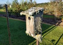 Greenish gray fungi covering parts of an old birdhouse in a yard