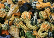 A jumble of knobby, twisted gourds in mixed shades of black, dark green, orange, yellow and white fill the frame.