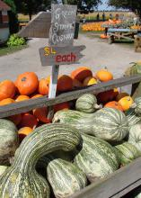 """An outdoor market displays a wooden sign over a crate of squash proclaiming """"Green stripe cushaw, $4 each."""" Behind it are small, orange pumpkins."""