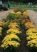 Plants with yellow, red and orange blooms grow in rows in flower beds with flowers of other colors, while people browse in the background.