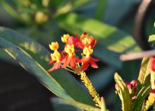 A delicate cluster of red flowers with yellow centers rises from a green background.