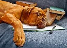 Dog with glasses sleeping on a notebook.