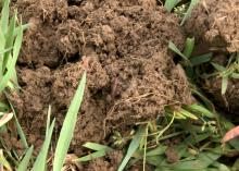Fresh, dark soil with a large earthworm in the middle.