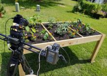 A camera and gear on a tripod point at a shallow wooden box that is raised off the ground and holds soil and small plants.