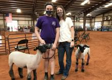 A daughter and her mother wearing masks in a rodeo building with two lambs leashed beside them.