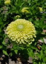 A single light-green flower blooms.