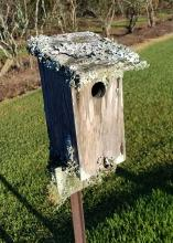 Ruffled edges of lichen cover the top of a wooden birdhouse.