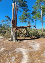 Against a background of standing trees, a tree trunk stands snapped into jagged pieces.