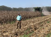 A man is in a corn field with harvest equipment.