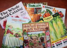 Six garden catalogs are displayed.