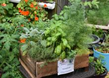 A wooden box is overflowing with different green plants.