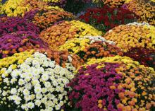 Yellow, white, orange and purple blooms form colorful mounds