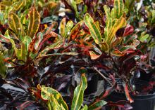 Plants have narrow leaves in greens, yellows and reds.