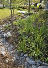 The landscape at the Oktibbeha County Heritage Museum in Starkville includes native plants and rainwater capture strategies to make the most of water resources. (Photo by MSU Office of Public Affairs/Megan Bean)