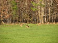 Food plots provide supplemental feeding options for Mississippi's deer and other wildlife. (Photo submitted by MDWFP/Scott Edwards)