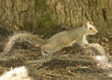 Squirrel season and other small game hunting opportunities are some of the best ways for young hunters and others to enjoy the outdoors. (MSU Extension Service file photo/Kat Lawrence)