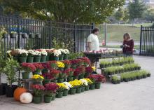 The Mississippi State University Horticulture Club sold a wide variety of flowering plants, trees, and vegetables at their annual fall plant sale behind Dorman Hall on Oct. 12. Students gain hands-on experience raising ornamental plants from seed and use funds raised by the plant sales to pay for educational conferences. (Photo by MSU Ag Communications/Kat Lawrence)
