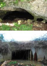In areas without many naturally occurring caves, certain species of bats roost and hibernate under bridges and in large concrete culverts. The resemblance between the Florida cave, top, and the Mississippi culvert, bottom, is evident. (Photos courtesy of Jeff Gore and Evan O'Donnell.)