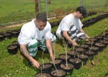 Keenan Watkins (left) and J.D. Rodgers check tree seedlings they planted in the forestry course offered by the Mississippi State University Extension Service at the Chickasaw County Regional Correctional Facility near Houston, Mississippi. This photo was taken on April 20, 2015. (Photo by MSU Ag Communications/Linda Breazeale)