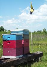 "Mississippi beekeepers can post a ""Bee Aware"" flag, such as this one flying in a bee yard in Monroe County, Mississippi, to raise awareness of pollinators in the area. (Photo by MSU Extension Service/Reid Nevins)"