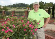 Oktibbeha County Master Gardener Charlie Weatherly pauses July 23, 2015, beside some of flowers growing in the Veterans Memorial Rose Garden, which he helped establish at the R.R. Foil Plant Science Research Center at Mississippi State University. (Photo by MSU Ag Communications/Kat Lawrence)