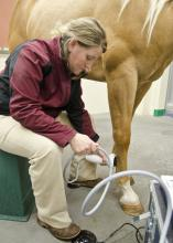 Dr. Cathleen Mochal, assistant clinical professor at the Mississippi State University College of Veterinary Medicine, uses noninvasive shock waves to treat tendon and ligament injuries that could impact physical soundness, which is critical for the usefulness of most horses. (MSU College of Veterinary Medicine File photo/Tom Thompson)