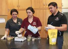 Mississippi State University junior Morgan Von Staden of Olive Branch, Mississippi, and graduate students Liz Ivey of Cumming, Georgia and Hector Portillo of Sarasota, Florida are members of a Department of Food Science, Nutrition and Health Promotion student team developing a product made of culled sweet potatoes that cafeterias could use to increase the nutritional value of school lunches. (Photo by MSU Extension Service, Kat Lawrence)