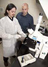 Drs. Peres Ramos Badial, left, and Camillo Bulla, researches in the Mississippi State University College of Veterinary Medicine, study how platelets alter cancer cells and help them metastasize. (Photo by MSU College of Veterinary Medicine/Tom Thompson)