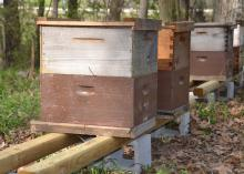 Several beehives were set up at the Mississippi Agriculture and Forestry Museum in Jackson, Mississippi, on March 16, 2016, for a hands-on, beginners beekeeping workshop planned for the weekend. The number of beekeepers in the state continues to rise. (Photo by MSU Extension Service/Susan Collins-Smith)