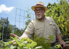 Hattiesburg pharmacist Jim Murray grows vegetables and herbs on a salad table. The raised plant beds are built and distributed by Master Gardener volunteers trained by the Mississippi State University Extension Service. (Photo by MSU Extension Service/Kevin Hudson)