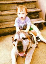 When Ray and Vanessa Beeson's dog Thor died in 2016, the family decided to have him necropsied to forward the science being done at the Mississippi State University College of Veterinary Medicine. Thor is seen here with then 2-year-old Avett Beeson. (Submitted Photo/Vanessa Beeson)