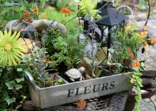 Repurposed items such as this wine crate can make the basis of a fun and creative combination container planting. (Photo by MSU Extension Service/Gary Bachman)