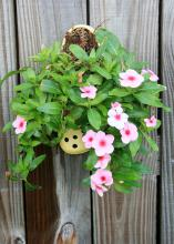 "By turning old shoes into wall sconces and planting drought-tolerant vincas in them, gardeners can create fun and environmentally friendly ""Croc Pots"" in the landscape. (Photo by MSU Extension Service/Gary Bachman)"