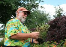 """Detective Bachman"" examines a struggling plant to figure out how to fix a problem it faced in the landscape. (Photo by MSU Extension Service)"