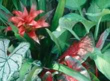 Bromeliads come in a wide variety of bloom shapes, sizes and colors, and they really are easier to grow than many think.
