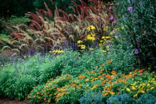 Flower beds receive a colorful boost when zinnias are included.